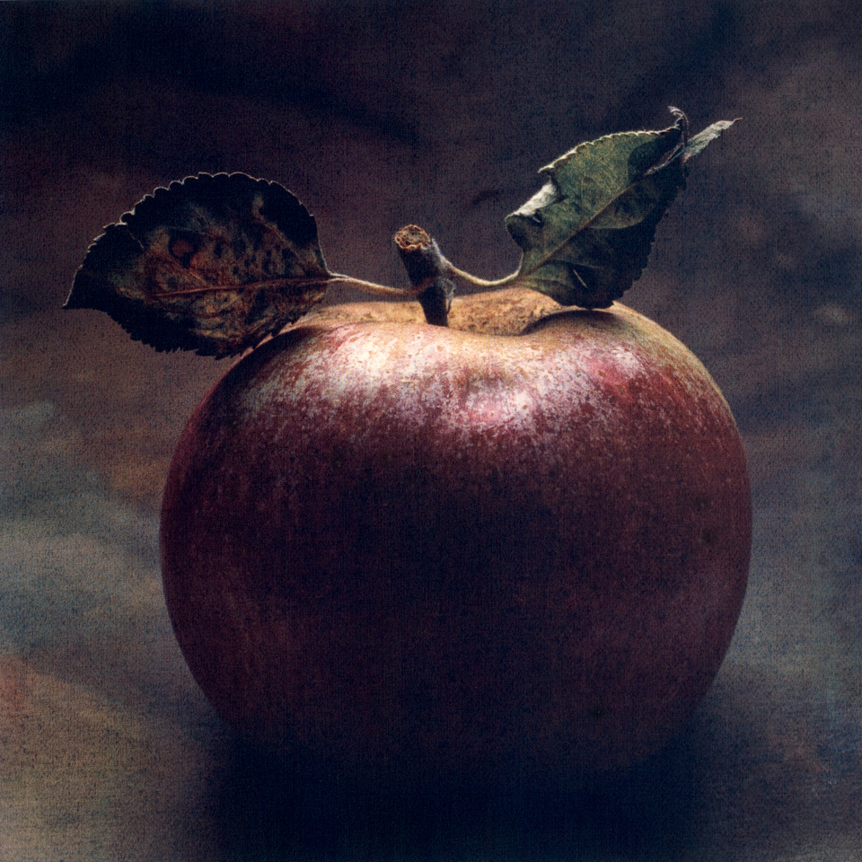adam and eve apple ii cy decosse photography